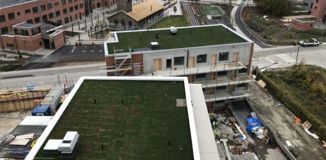 Gröna tak på kvarteret Gjuteriet